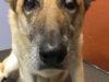 -california-bans-puppy-mills