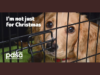 why-not-to-give-pets-as-presents